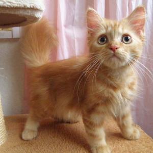 今日は「子猫ちゃんの情報アップしますよ!」の巻