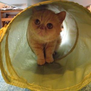 今日は「トンネル内でのんびり」の巻