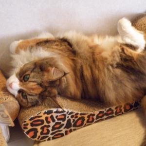 今日は「永遠のお嬢様キティちゃんが凄い!」の巻