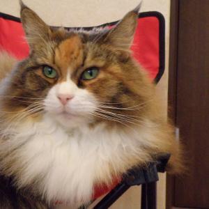 今日は「キティちゃんが代弁してくれました」の巻