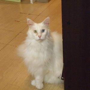 今日は「ついに外猫になった?」の巻