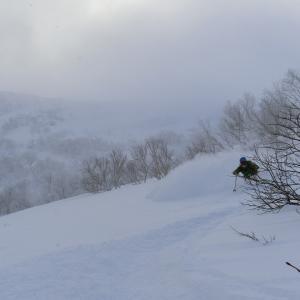 スキー ski パウダースノー powder snow