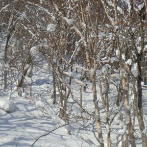 ツリーランスキー tree run ski
