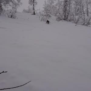降雪 新雪 スキー ski