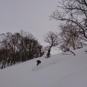 昨日の雪 ツリーラン