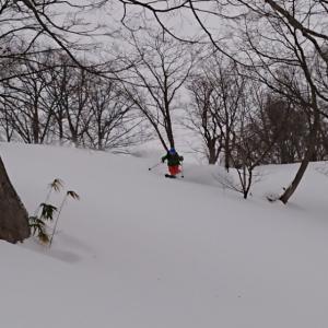 本日の雪 しっとりパウダースノー