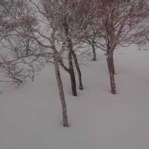 本日の降雪 濃霧