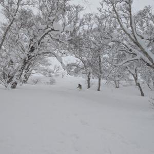 ツリーラン tree run