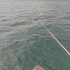 まさかの連敗・・・・近場です。どうしてもアオリQで釣りたいと思い!