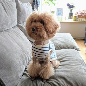 ワクチン接種と我が家の愛犬