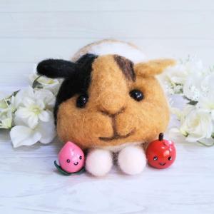羊毛モルモット