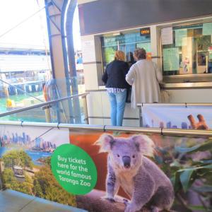 フェリーに乗って動物園へ@Sydney旅行記13