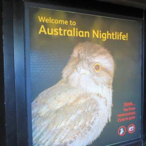 タロンガ動物園 爬虫類も色々@Sydney旅行記16