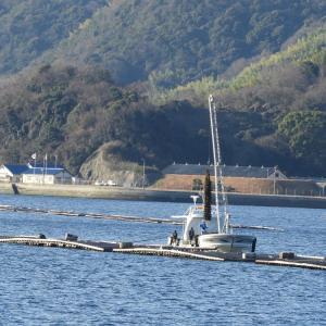 養殖牡蠣の水揚げ風景・お散歩クルーズ船より撮影。