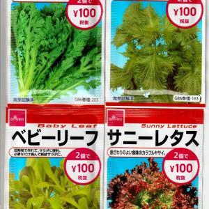葉物野菜を野菜プランターで育て始めました。