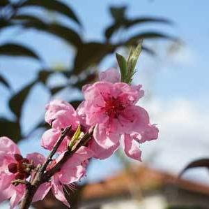 春はもうすぐ!