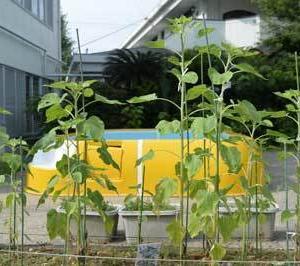 商品化ー人間、植物、農作物・・・
