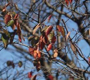 紅葉、落ち葉