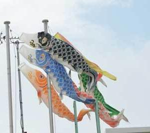 風!シュッ!シュッ! 鯉のぼりだ!