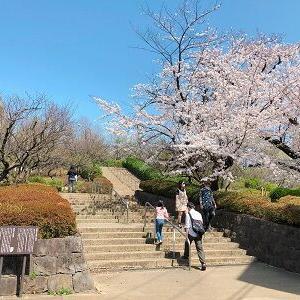 羽根木公園でお花見散歩