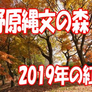 上野原縄文の森の2019年紅葉 鹿児島の風景