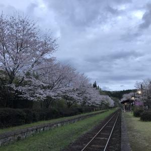 夕暮れ時の嘉例川駅 桜が満開
