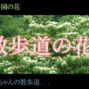 錦江湾公園の花 じっちゃんの散歩道