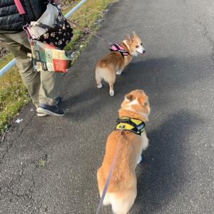 お散歩日和でロング散歩