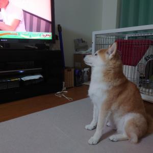テレビがそんなに好き?
