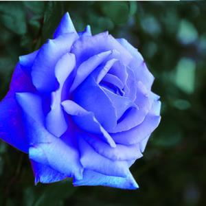 【BlueRose】 夜明けのマリア(08)