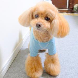 柔らかい物ばかり食べてると犬も人間も老化が進むかな