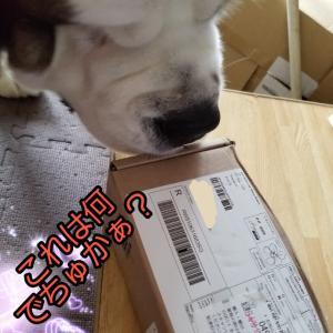 国際郵便でお薬が届いたでちゅよぉ