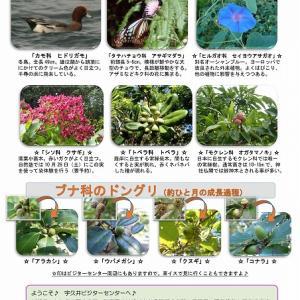 宇久井 吉野熊野国立公園で見られる生き物のご紹介♪(10月後半編)