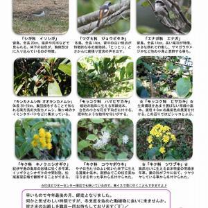 宇久井 吉野熊野国立公園で見られる生き物のご紹介♪(12月前半編)