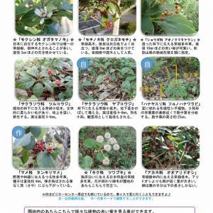 宇久井 吉野熊野国立公園で見られる生き物のご紹介♪(1月後半編)