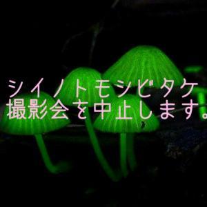 シイノトモシビタケ撮影会中止のお知らせ