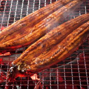 Goto対象 ホテル浦島65周年 生まぐろ&うなぎ 秋の味覚サンマとキノコ食べ放題プラン