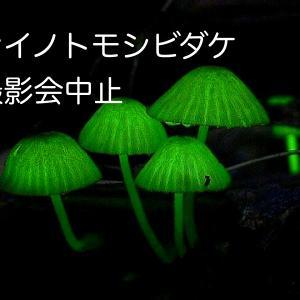 シイノトモシビダケ撮影会 中止のお知らせ。