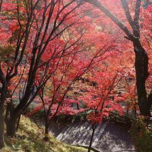心地良い季候の秋の京都散策