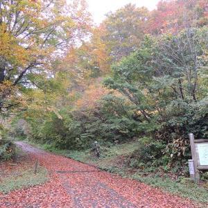 獣臭がすごいけど紅葉が始まってた医王山周辺