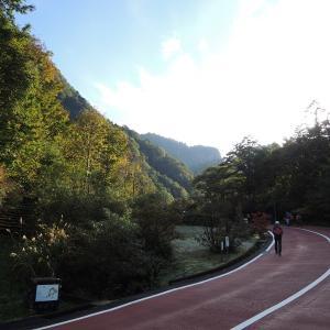 紅葉の弥陀ヶ原と称名滝・そして初冠雪の頂も!