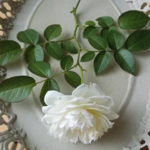 夏至と白いバラ