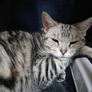 ★数時間後に別室から戻ってきた猫の様子。