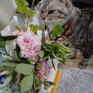 ★第48回 誕生日。でっかいケーキとお花など。
