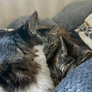猫ベッドかっ!