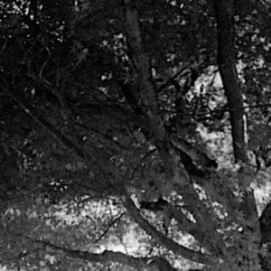 紅葉の樹。