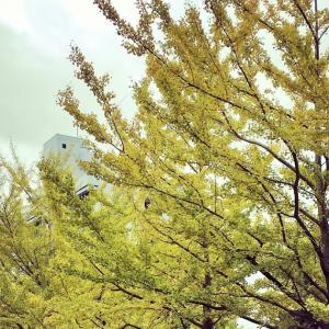 松江キャンパスの紅葉
