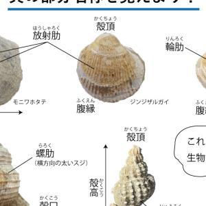 貝の部分名称