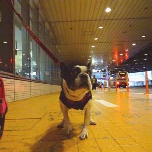 ニコ、空港でお出迎え