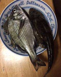 奥浜名湖前打ち釣果